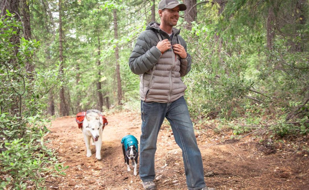 Walking dogs off leash in woods