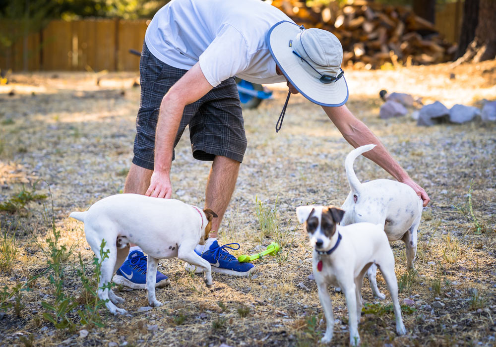 Dog Training with Jack Russels