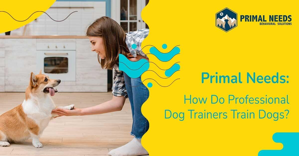 How dog trainers train dogs | Primal Needs - Best dog training in Sacramento