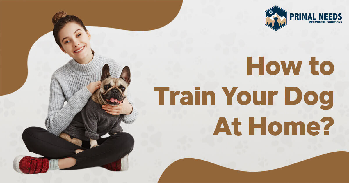 How to Train Your Dog At Home? | Primal Needs