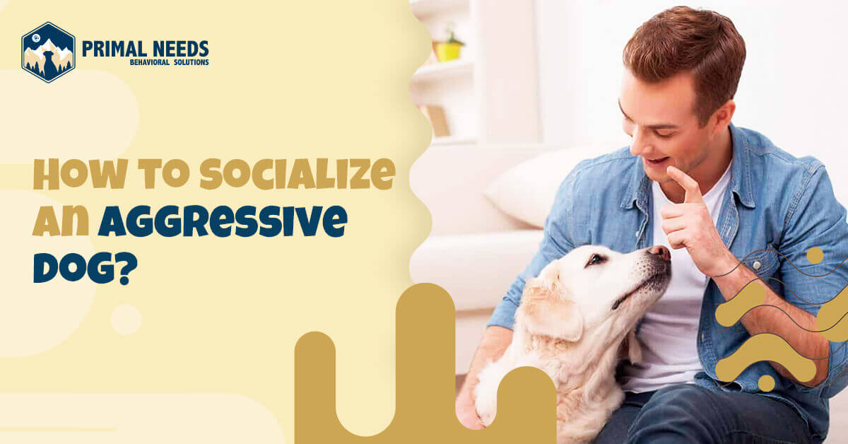 How to socialize an aggressive dog | Primal Needs - Aggressive behavior dog training
