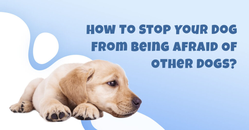 How To Stop Your Dog From Being Afraid Of Other Dogs?