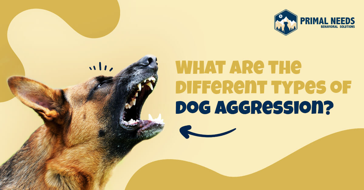 What are the different types of dog aggression | Primal Needs - aggressive dog trainers in Sacramento