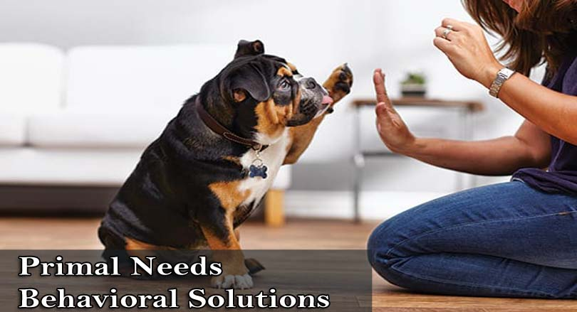Primal Needs Aggressive Dog Trainers – Best Dog Trainers in California